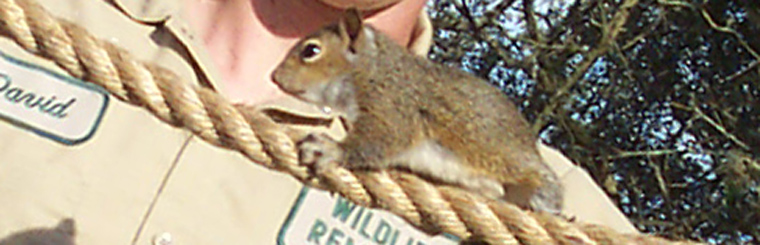 Home Remedies To Keep Away Squirrels And Get Rid Of Them